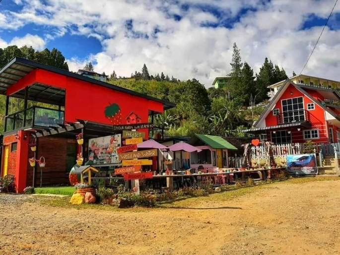 Mesilou Highland Strawberry Farm